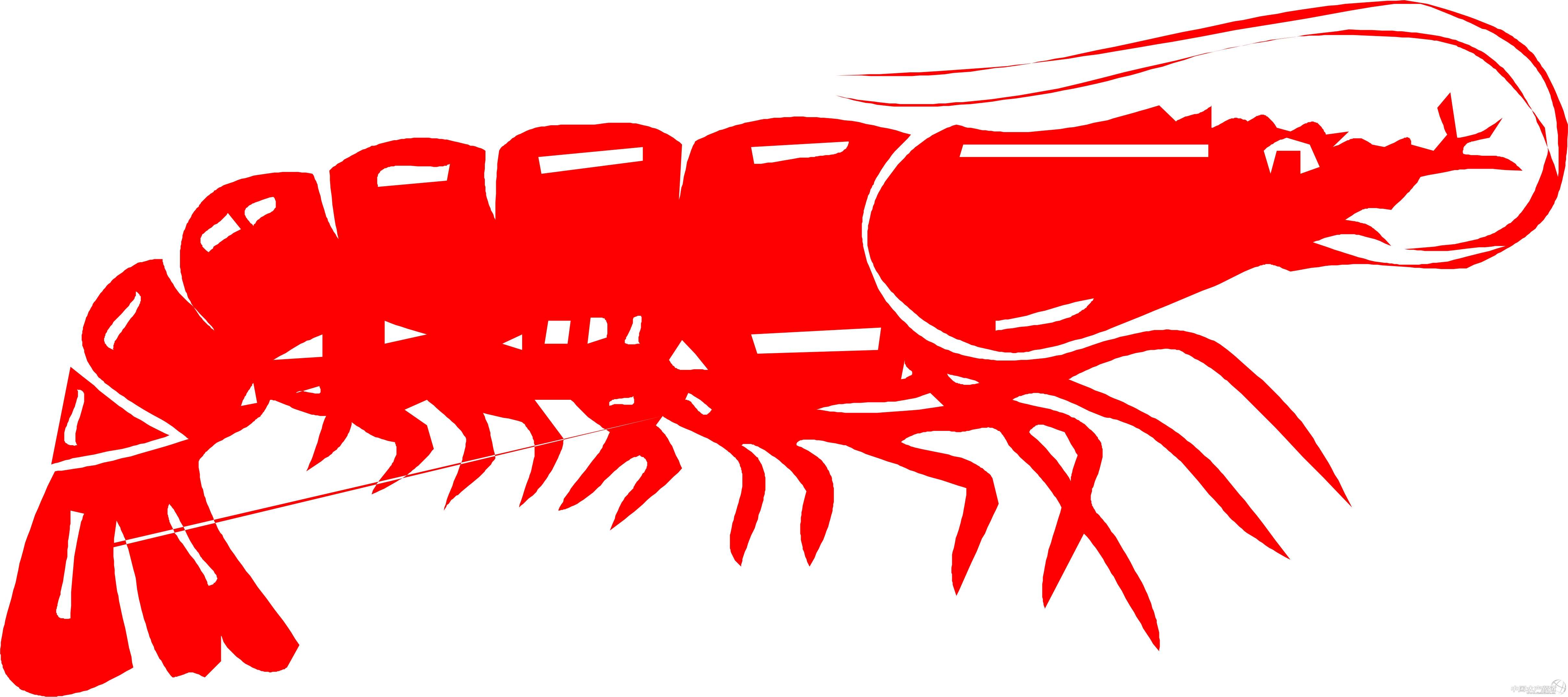 总结早批养虾问题 如果2月或3月份放苗的早批都结束了,应该都进入第二批养殖了,这批虾我们遇到的比较棘手的问题无非就两个: 第一、连续阴雨天、气温、水温低。这个影响对虾无法正常生长也只能期待天气好转咯,但是这个期间的水质和虾容易出问题,因为长期无太阳的光合作用和一直低水温的环境藻类必定也无法正常繁殖,所以水慢慢变清,又无太阳无法肥水,导致整个生态系统受破坏。这个倒是好处理,每天保持解毒,泼应激药和2天一次底改。坚持做!保虾健康不死要紧。 第二 、特异副溶血性弧菌。我们的塘发病前无任何征兆,水色良好各项指标